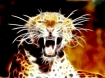 Leopard_Roar_by_zanardo